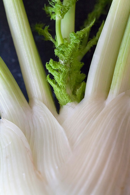 fennel-plant-photo-by-Jackie-Alpers